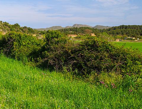 Grundstück kaufen Mallorca Nordosten