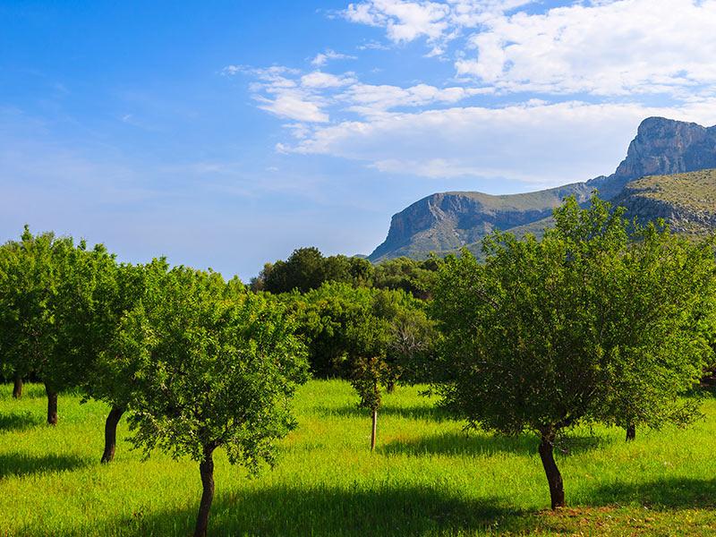 Grundstück kaufen Mallorca